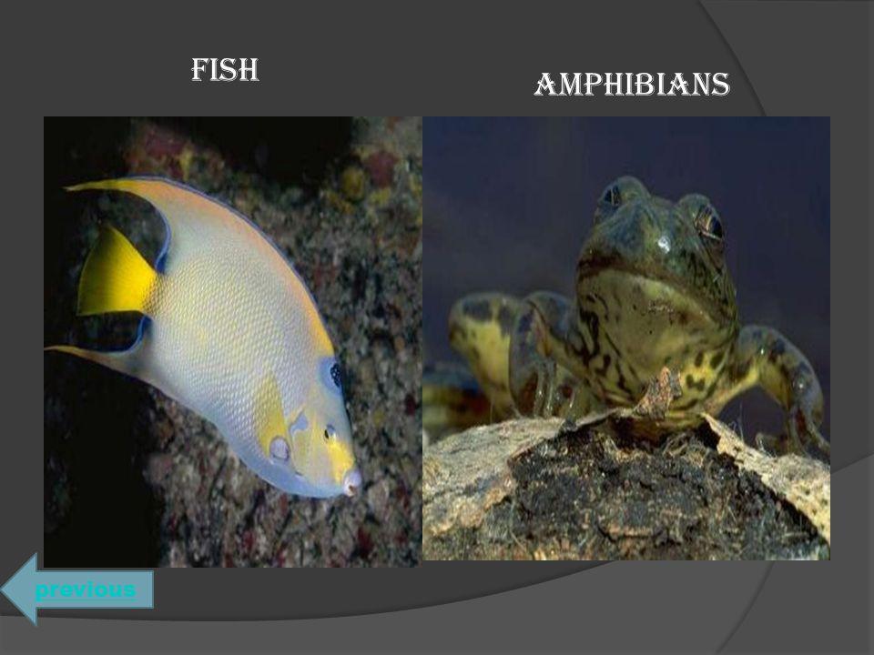FISH AMPHIBIANS previous