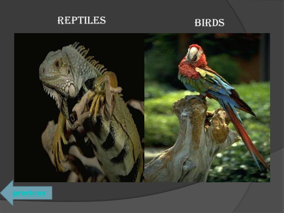REPTILES BIRDS previous