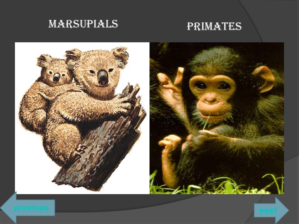 MARSUPIALS PRIMATES previous next
