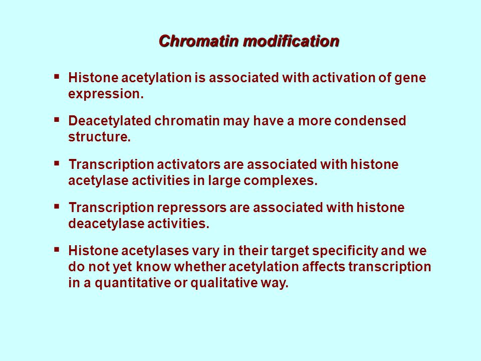 Chromatin modification  Histone acetylation is associated with activation of gene expression.  Deacetylated chromatin may have a more condensed stru