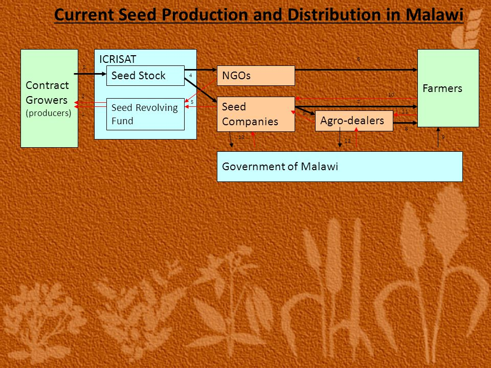 Current Seed Production and Distribution in Malawi ICRISAT Seed Stock Seed Revolving Fund Seed Companies NGOs Agro-dealers Farmers Government of Malawi Contract Growers (producers) 1 2 3 5 4 6 7 8 8 9 10 11 12 13