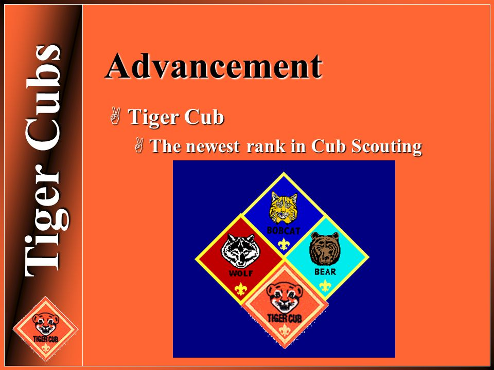 Tiger Cubs Advancement  Tiger Cub  The newest rank in Cub Scouting