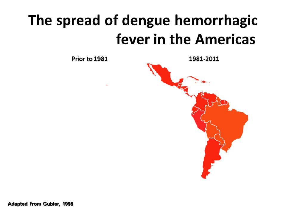 The spread of dengue hemorrhagic fever in the Americas Adapted from Gubler, 1998 Prior to 1981 1981-2011