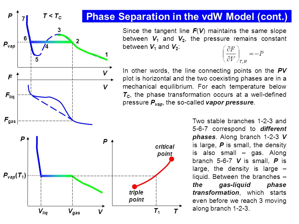 Phase Separation in the vdW Model (cont.) P V V gas V liq P vap (T 1 ) P T T1T1 triple point critical point Since the tangent line F(V) maintains the same slope between V 1 and V 2, the pressure remains constant between V 1 and V 2 : In other words, the line connecting points on the PV plot is horizontal and the two coexisting phases are in a mechanical equilibrium.