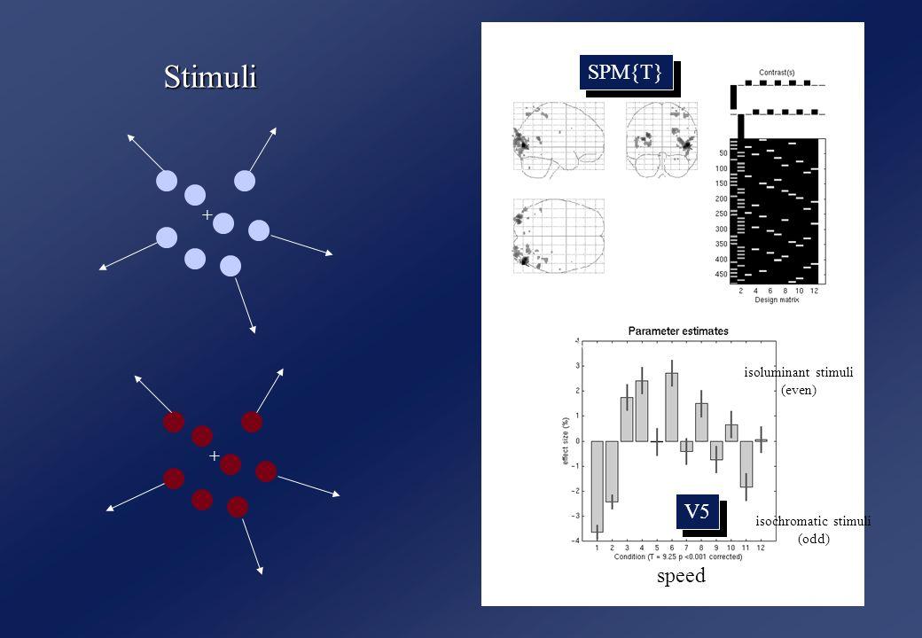 SPM{T} speed isoluminant stimuli (even) isochromatic stimuli (odd) V5 + + Stimuli