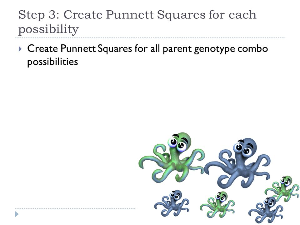 Step 3: Create Punnett Squares for each possibility  Create Punnett Squares for all parent genotype combo possibilities
