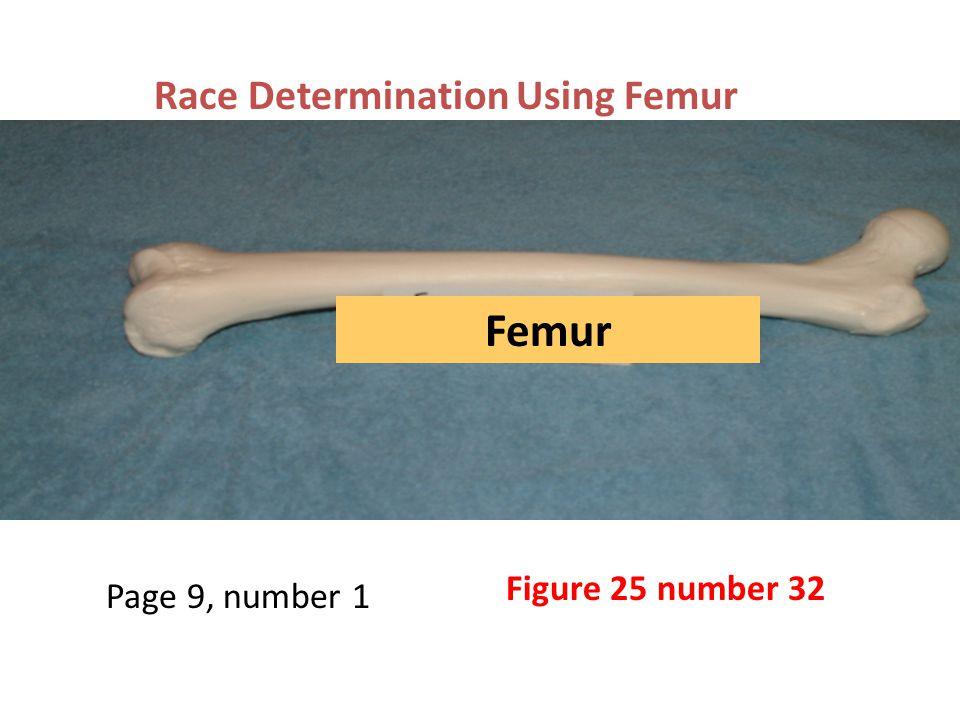 Race determination using a femur Hand fits under femur, Negroid race eliminated Page 9, step 1 Race