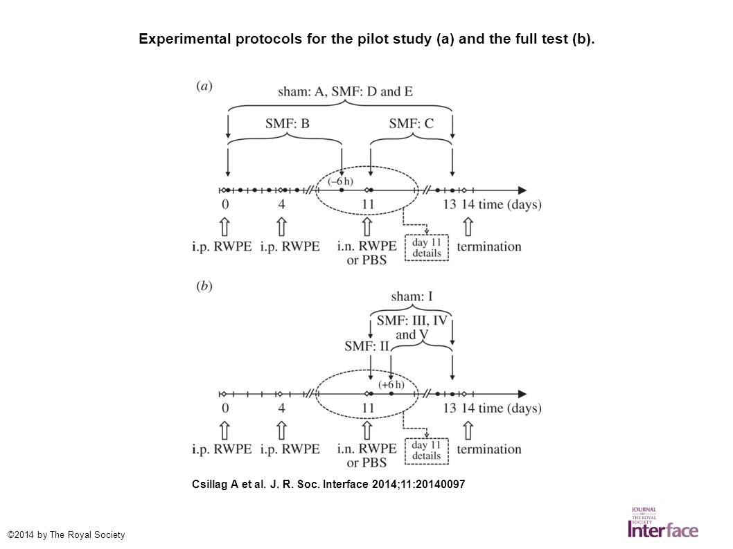 Experimental protocols for the pilot study (a) and the full test (b).