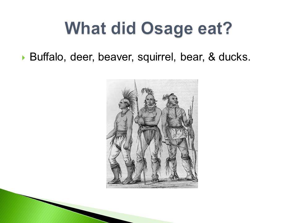  The buffalo, the Osage could use every part of the buffalo. They used the buffalo for food, clothes, and shelter.