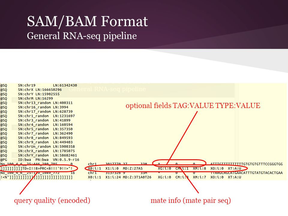 SAM/BAM Format General RNA-seq pipeline query quality (encoded) optional fields TAG:VALUE TYPE:VALUE mate info (mate pair seq)