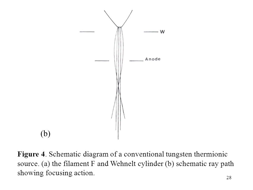 28 (b) Figure 4. Schematic diagram of a conventional tungsten thermionic source. (a) the filament F and Wehnelt cylinder (b) schematic ray path showin