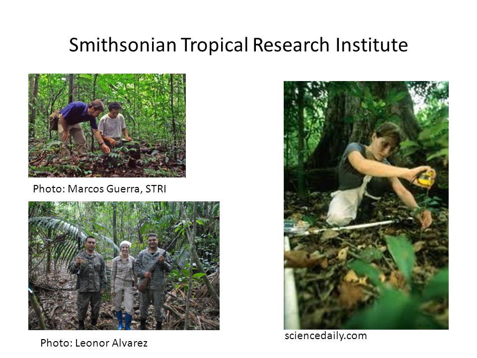 Smithsonian Tropical Research Institute sciencedaily.com Photo: Marcos Guerra, STRI Photo: Leonor Alvarez