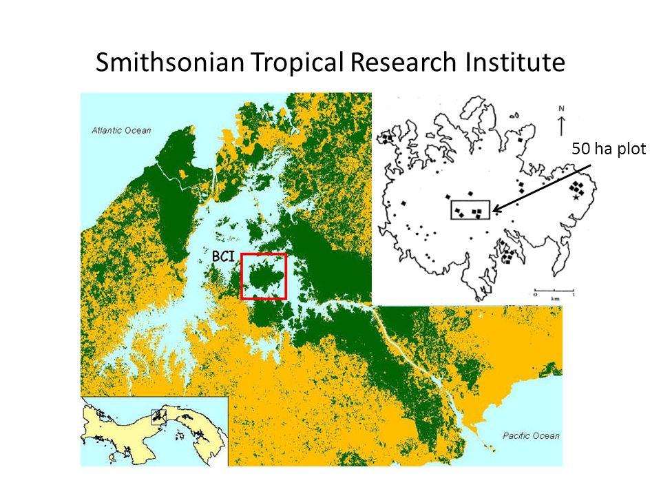 Smithsonian Tropical Research Institute 50 ha plot