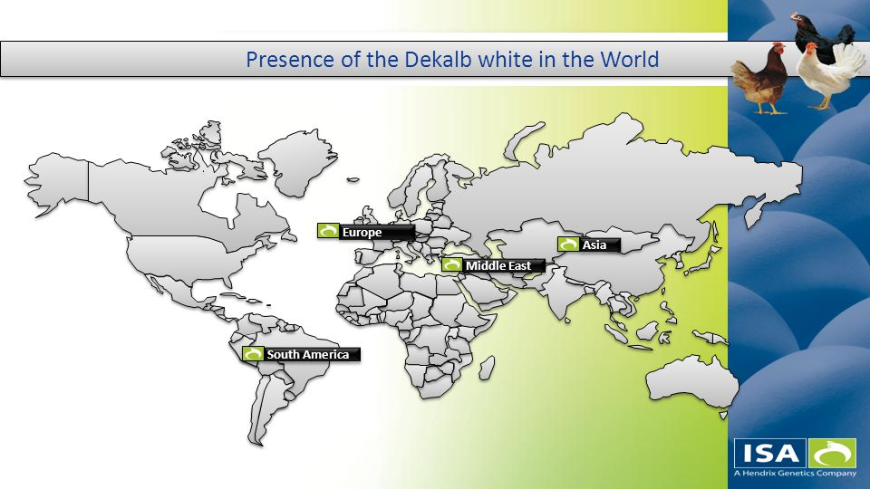 '''''' Presence of the Dekalb white in the World South America Europe Asia Middle East