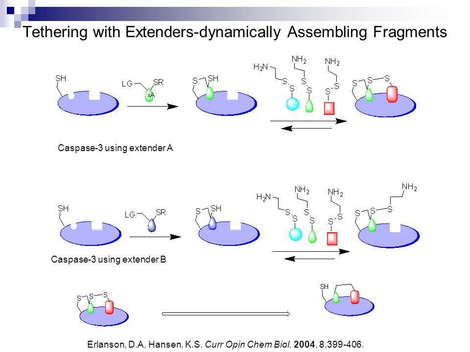 Tethering with Extenders-dynamically Assembling Fragments Caspase-3 using extender A Caspase-3 using extender B Erlanson, D.A, Hansen, K.S. Curr Opin