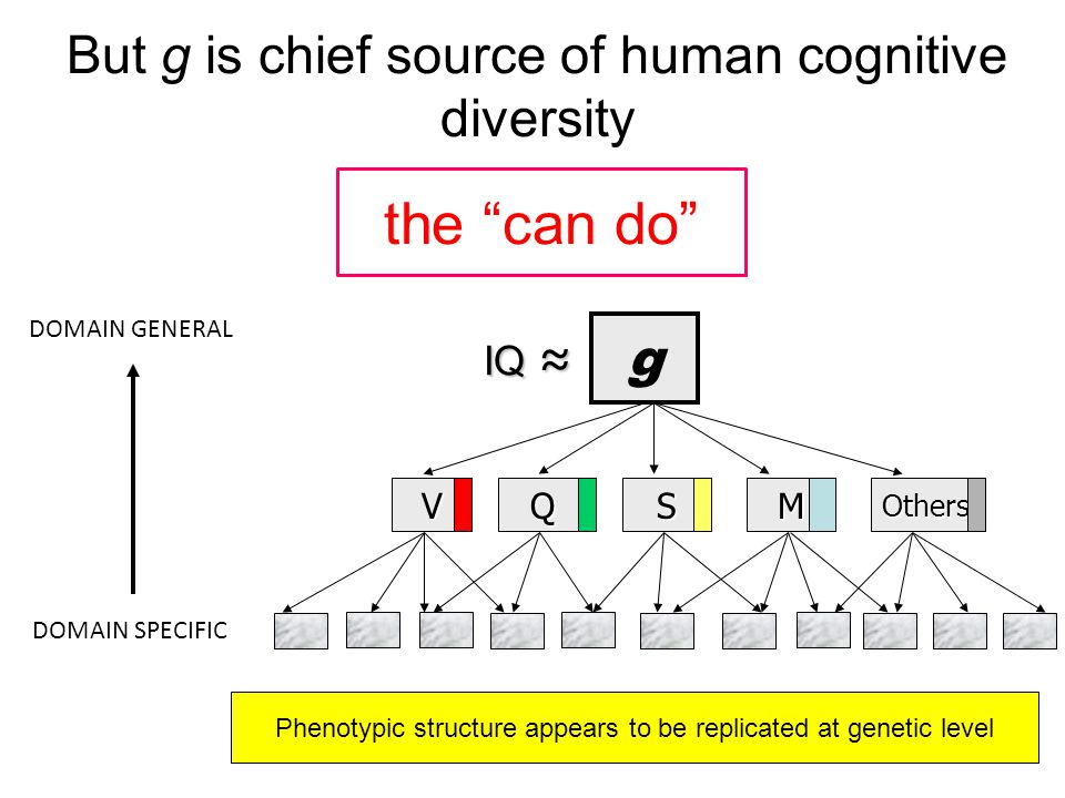 But g is chief source of human cognitive diversity g VQSMOthers DOMAIN GENERAL DOMAIN SPECIFIC IQ ≈ IQ ≈ Phenotypic structure appears to be replicated at genetic level the can do