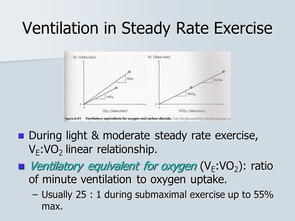 Does Ventilation Limit Aerobic Capacity for Average Person.