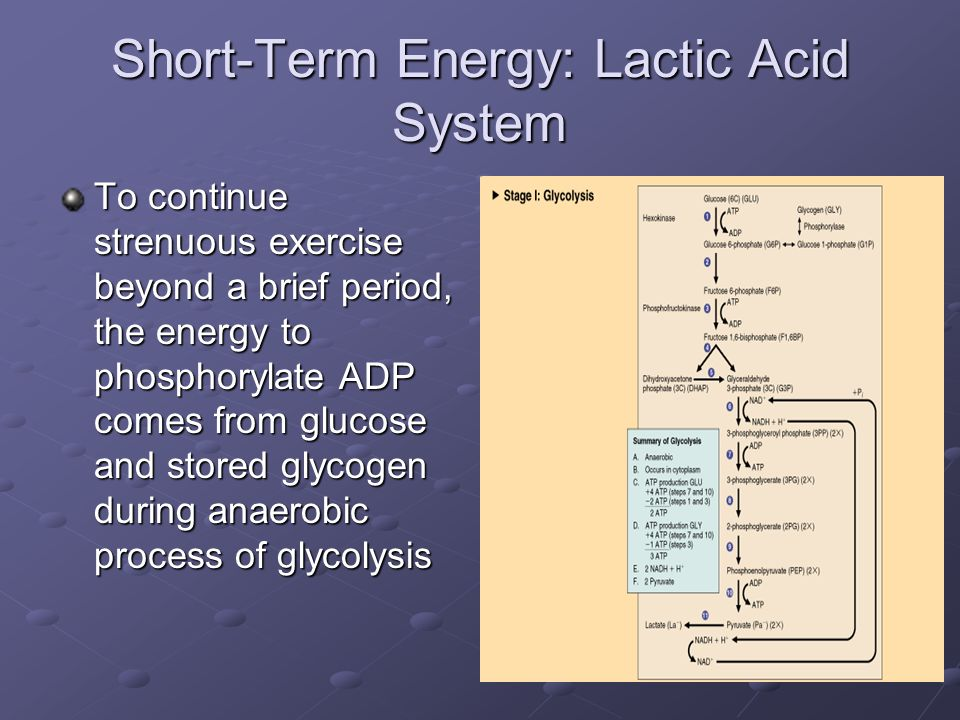 Short-Term Energy: Lactic Acid System This occurs when oxygen supply is Inadequate or Inadequate or Oxygen demands exceed oxygen utilization Oxygen demands exceed oxygen utilization Activities powered mainly by lactic acid energy system Last phase of mile run, 400 m run Last phase of mile run, 400 m run 100 m swim 100 m swim Multiple sprint sports: ice hockey, field hockey, and soccer Multiple sprint sports: ice hockey, field hockey, and soccer