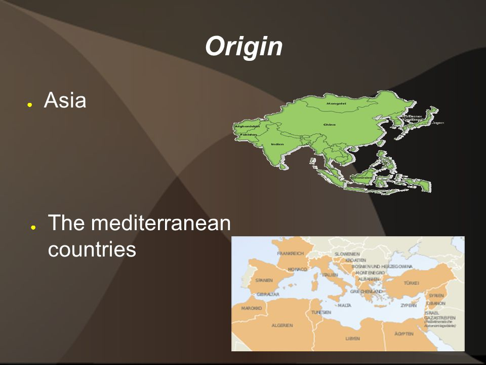 Origin ● Asia ● The mediterranean countries