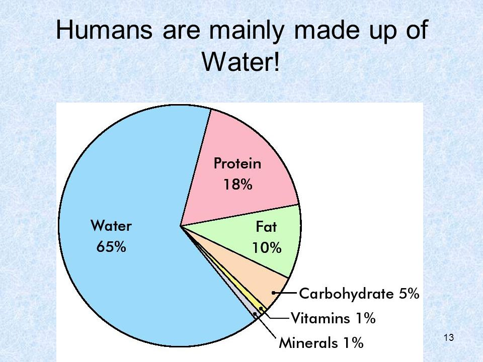 Humans are mainly made up of Water! 13