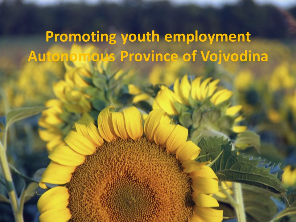 Promoting youth employment Autonomous Province of Vojvodina