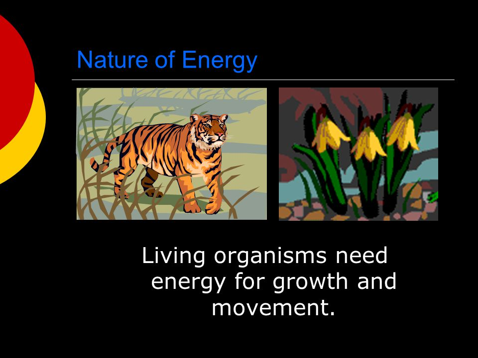 Nature of Energy Living organisms need energy for growth and movement.