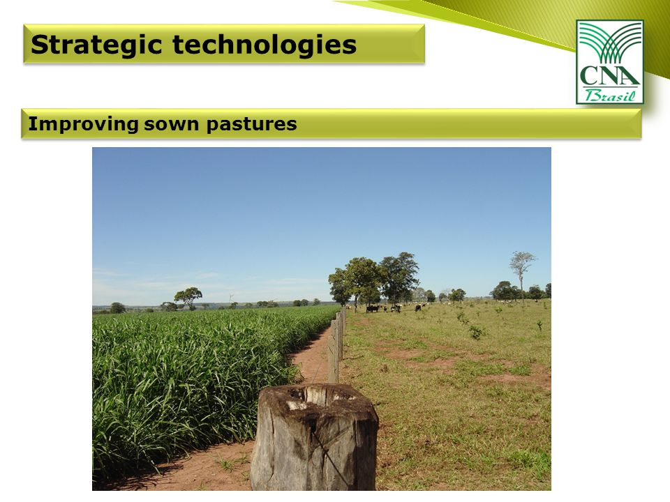 Improving sown pastures Strategic technologies