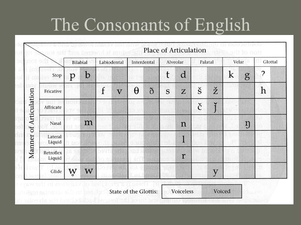 The Consonants of English