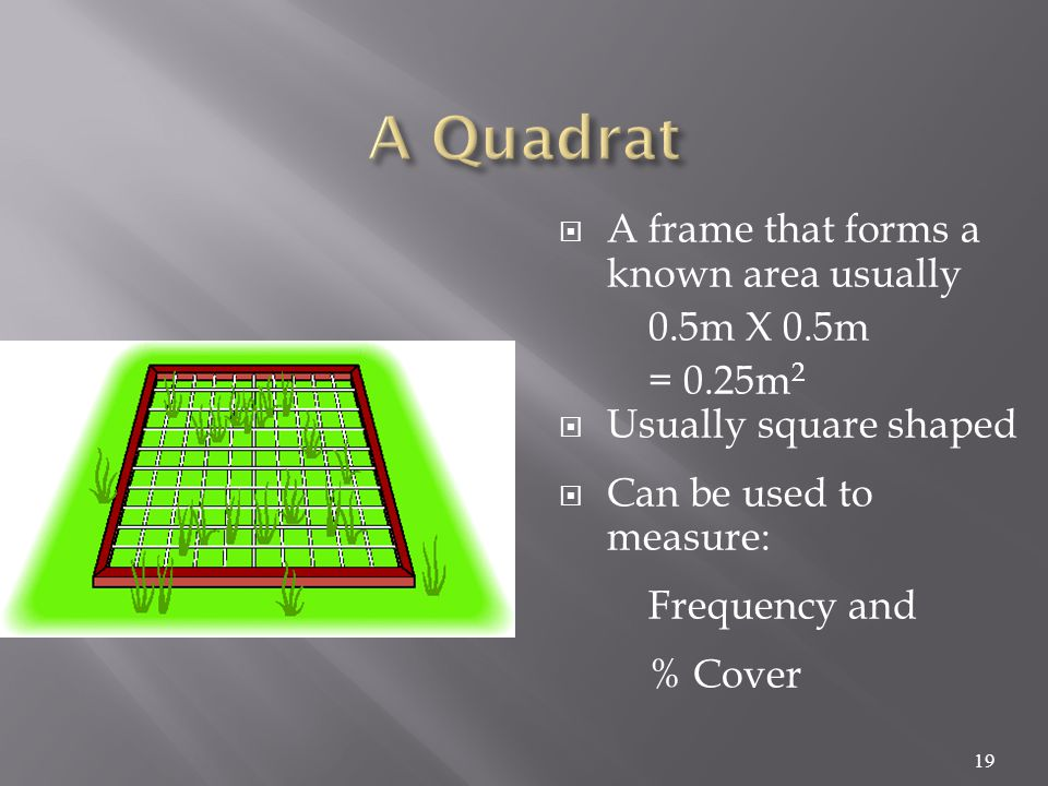  A frame that forms a known area usually 0.5m X 0.5m = 0.25m 2  Usually square shaped  Can be used to measure: Frequency and % Cover 19