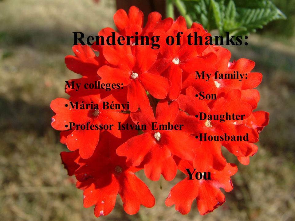Rendering of thanks: My family: Son Daughter Housband My colleges: Mária Bényi Professor István Ember You