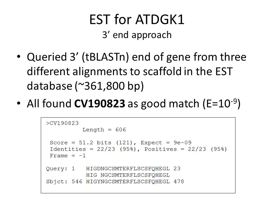EST for ATDGK1 3' end approach Queried 3' (tBLASTn) end of gene from three different alignments to scaffold in the EST database (~361,800 bp) All foun