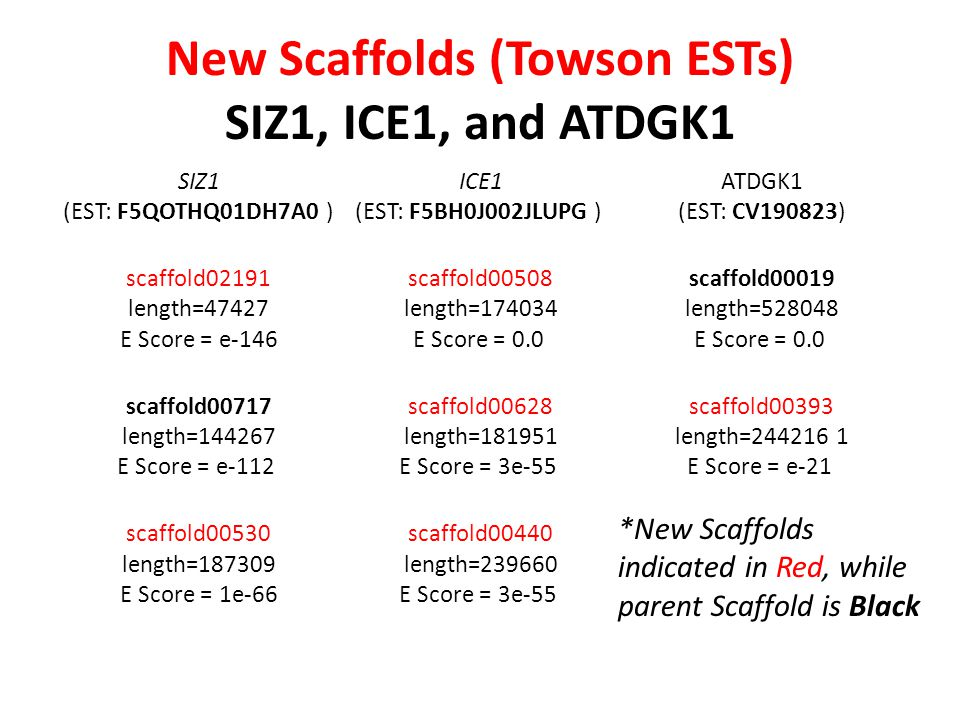 New Scaffolds (Towson ESTs) SIZ1, ICE1, and ATDGK1 SIZ1 (EST: F5QOTHQ01DH7A0 ) scaffold02191 length=47427 E Score = e-146 scaffold00717 length=144267