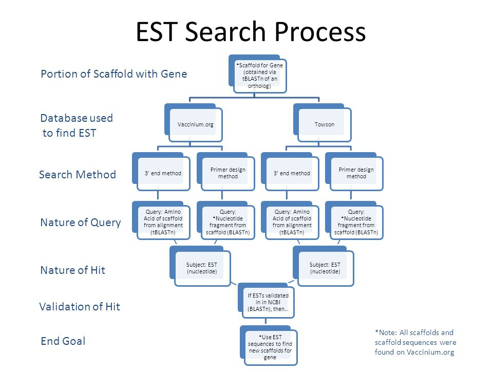 *Use EST sequences to find new scaffolds for gene Subject: EST (nucleotide) EST Search Process *Scaffold for Gene (obtained via tBLASTn of an ortholog