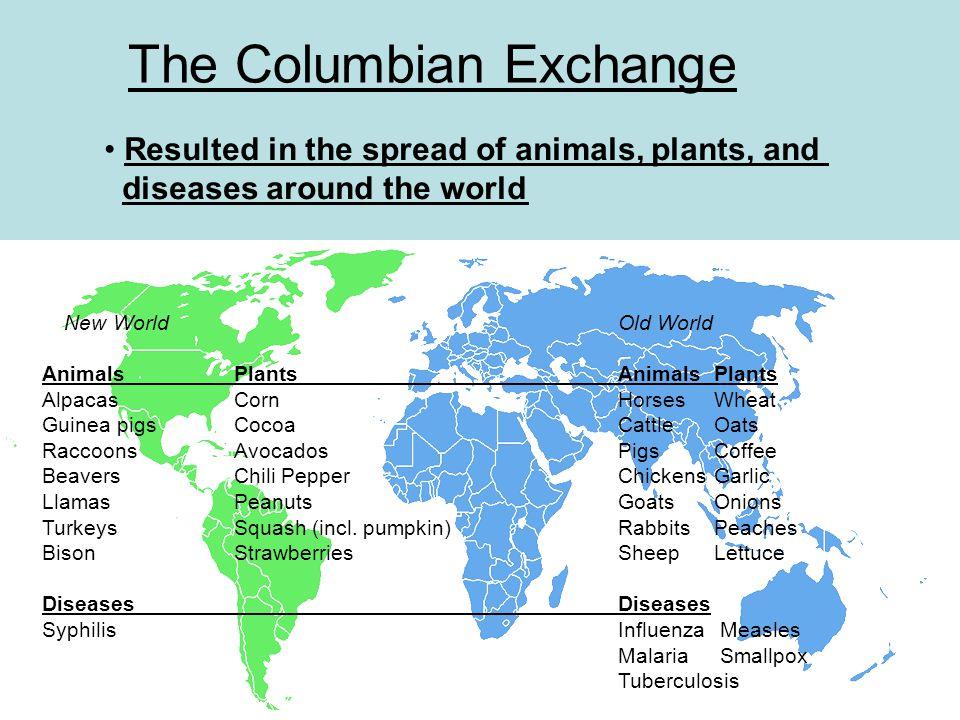 The Columbian Exchange New WorldOld World AnimalsPlantsAnimalsPlants AlpacasCornHorses Wheat Guinea pigsCocoaCattleOats RaccoonsAvocadosPigsCoffee Bea