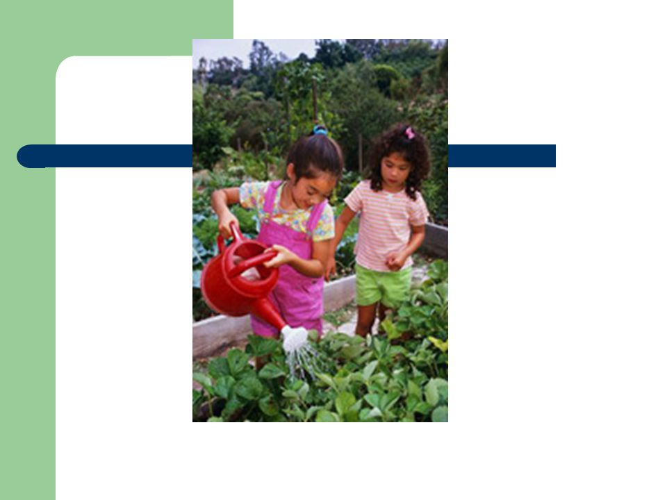 Assembly Bill 1535: Early Info Gardens will be used for instruction during: – Academic class time (2607) – After-school program (2470) – Lunch/Recess (1979) – Before school program (453)