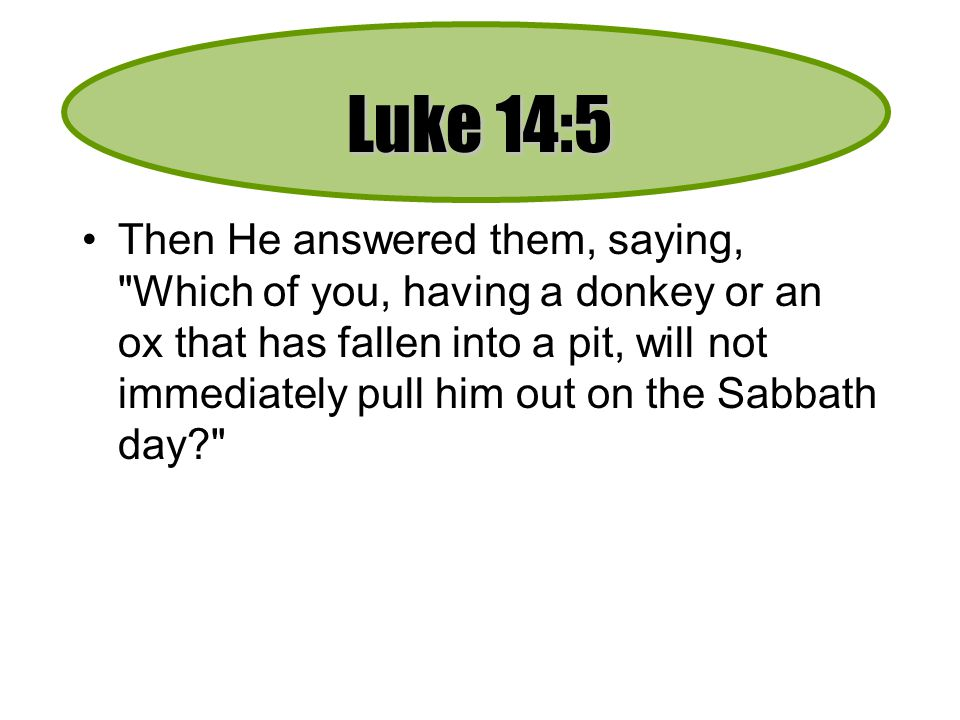 Luke 14:5 Then He answered them, saying, Which of you, having a donkey or an ox that has fallen into a pit, will not immediately pull him out on the Sabbath day?