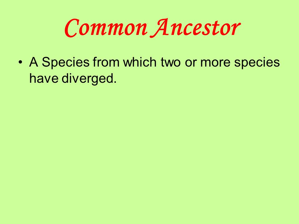 Common Ancestor A Species from which two or more species have diverged.