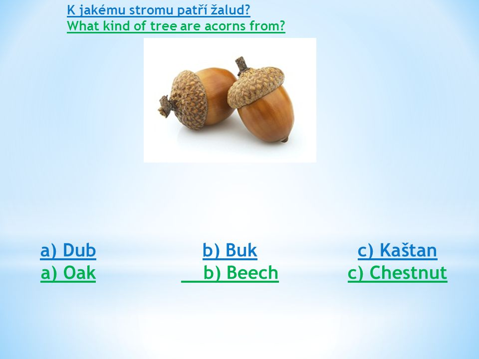 K jakému stromu patří žalud? What kind of tree are acorns from? a) Dub a) Oak b) Buk b) Beech c) Kaštan c) Chestnut