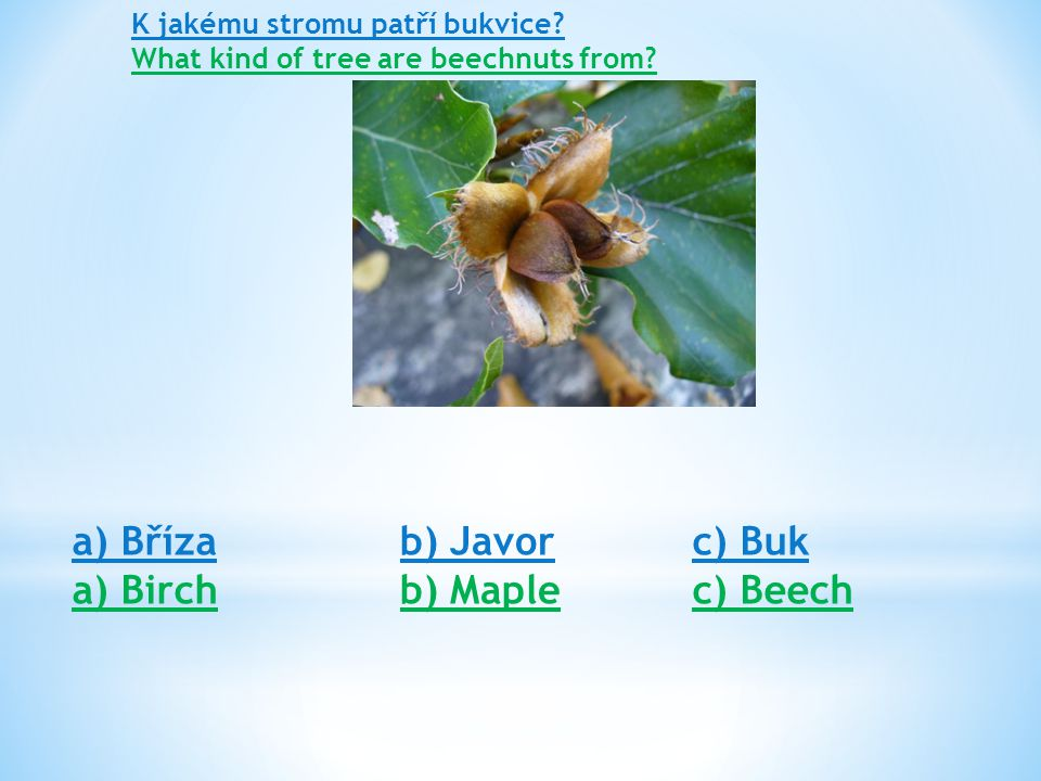 K jakému stromu patří bukvice. What kind of tree are beechnuts from.