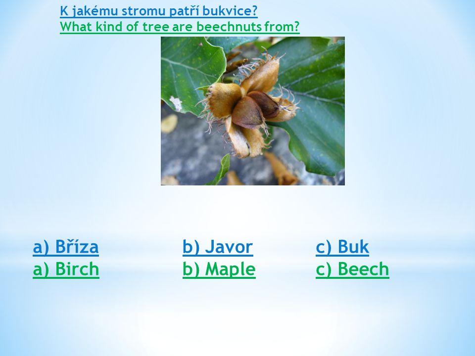 K jakému stromu patří ořech.What kind of tree are walnuts from.