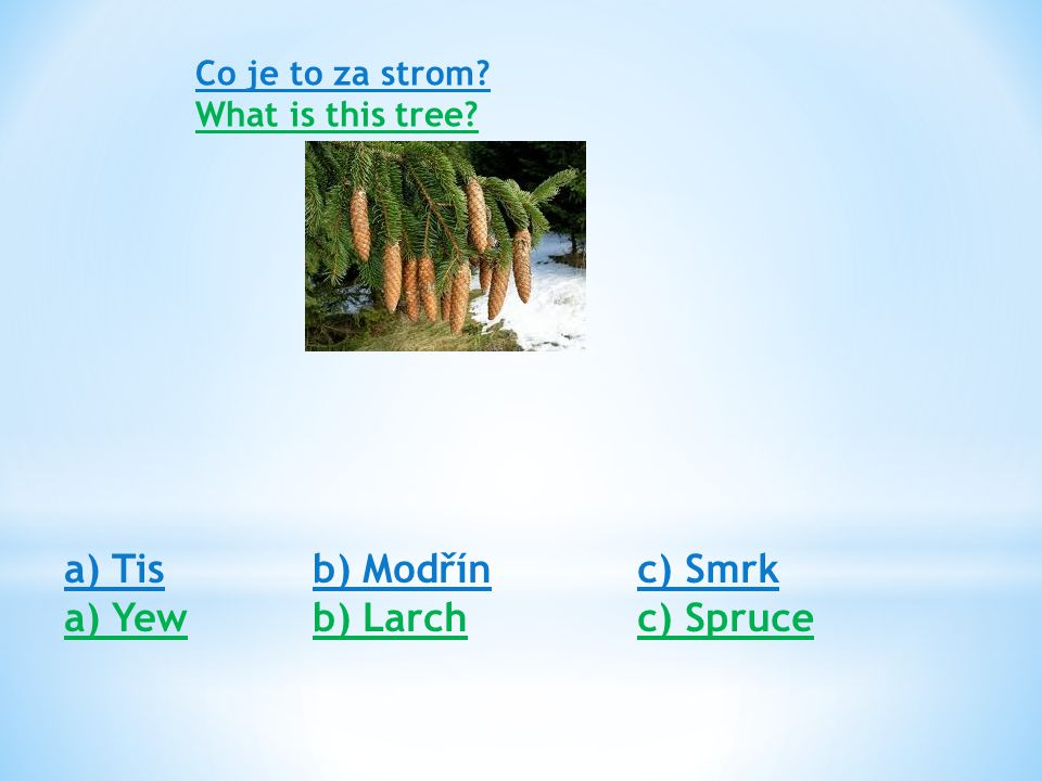 Co je to za strom? What is this tree? a) Tis a) Yew b) Modřín b) Larch c) Smrk c) Spruce
