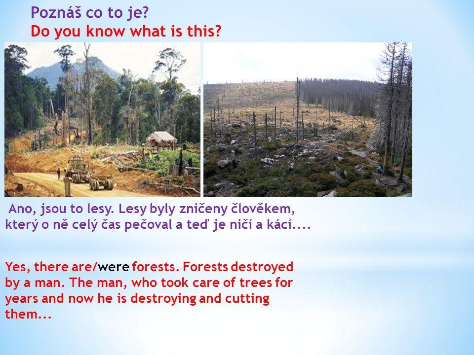 Zamyslete se nad tím jak se chováte ke stromům a přírodě a zkuste to změnit.