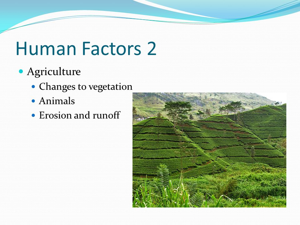 Human Factors 2 Agriculture Changes to vegetation Animals Erosion and runoff