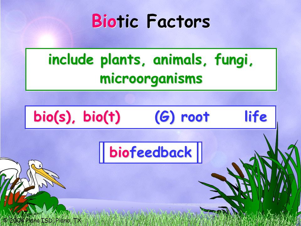 © 2004 Plano ISD, Plano, TX Biotic Factors Bio bio(s), bio(t) (G) root life include plants, animals, fungi, microorganisms biology biostatistics biography biotechnology biosphere biomechanics biotic biofeedback