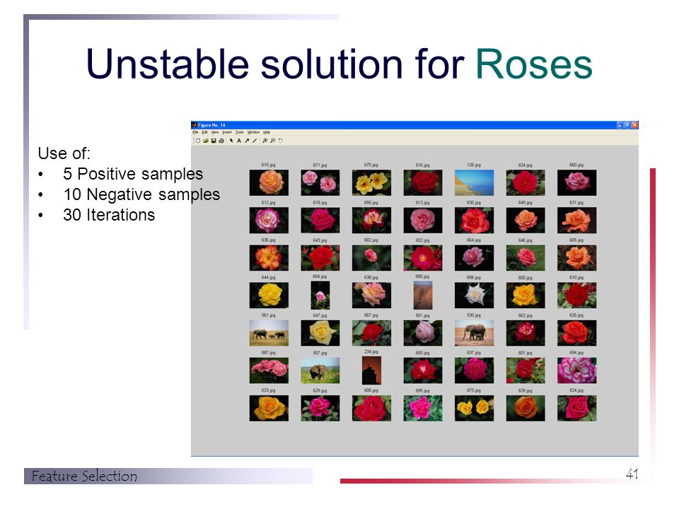 Feature Selection 41 Unstable solution for Roses Use of: 5 Positive samples 10 Negative samples 30 Iterations