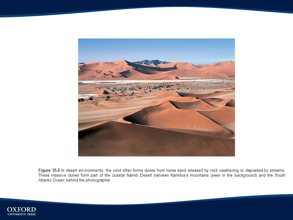 Figure 35.6 In desert environments, the wind often forms dunes from loose sand released by rock weathering or deposited by streams.