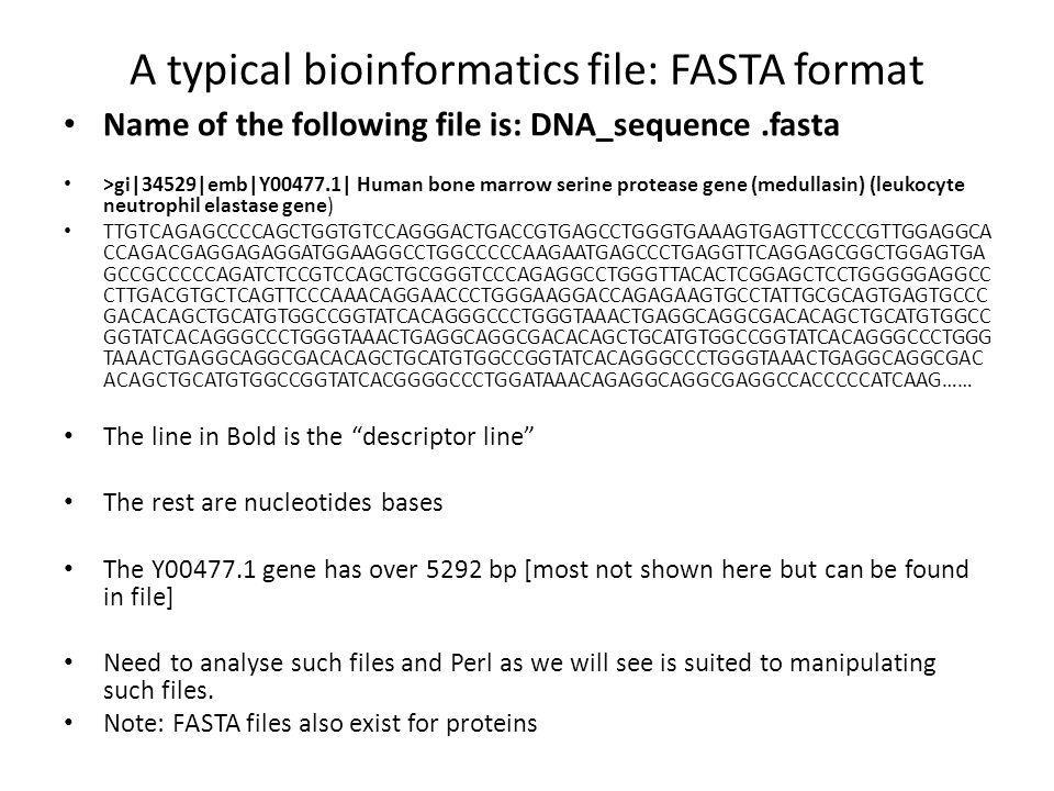 A typical bioinformatics file: FASTA format Name of the following file is: DNA_sequence.fasta >gi|34529|emb|Y00477.1| Human bone marrow serine protease gene (medullasin) (leukocyte neutrophil elastase gene) TTGTCAGAGCCCCAGCTGGTGTCCAGGGACTGACCGTGAGCCTGGGTGAAAGTGAGTTCCCCGTTGGAGGCA CCAGACGAGGAGAGGATGGAAGGCCTGGCCCCCAAGAATGAGCCCTGAGGTTCAGGAGCGGCTGGAGTGA GCCGCCCCCAGATCTCCGTCCAGCTGCGGGTCCCAGAGGCCTGGGTTACACTCGGAGCTCCTGGGGGAGGCC CTTGACGTGCTCAGTTCCCAAACAGGAACCCTGGGAAGGACCAGAGAAGTGCCTATTGCGCAGTGAGTGCCC GACACAGCTGCATGTGGCCGGTATCACAGGGCCCTGGGTAAACTGAGGCAGGCGACACAGCTGCATGTGGCC GGTATCACAGGGCCCTGGGTAAACTGAGGCAGGCGACACAGCTGCATGTGGCCGGTATCACAGGGCCCTGGG TAAACTGAGGCAGGCGACACAGCTGCATGTGGCCGGTATCACAGGGCCCTGGGTAAACTGAGGCAGGCGAC ACAGCTGCATGTGGCCGGTATCACGGGGCCCTGGATAAACAGAGGCAGGCGAGGCCACCCCCATCAAG…… The line in Bold is the descriptor line The rest are nucleotides bases The Y00477.1 gene has over 5292 bp [most not shown here but can be found in file] Need to analyse such files and Perl as we will see is suited to manipulating such files.