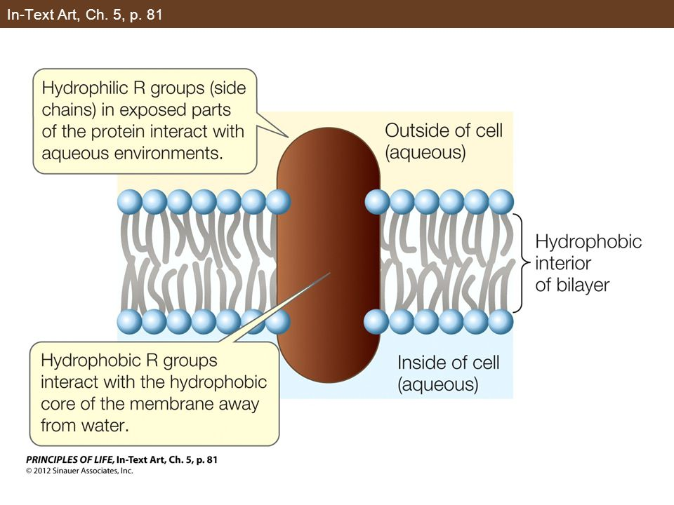 Figure 5.5 Aquaporins Increase Membrane Permeability to Water (Part 3)
