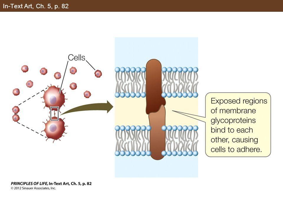 Figure 5.9 Receptor-Mediated Endocytosis