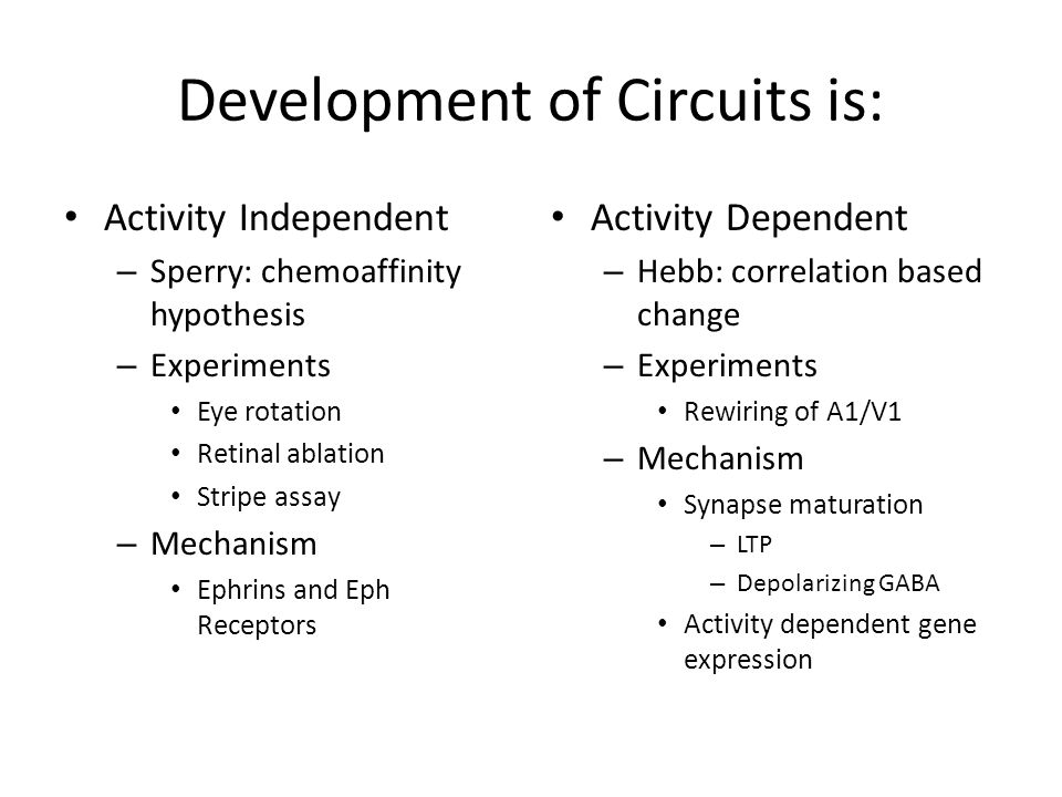 Development of Circuits is: Activity Independent – Sperry: chemoaffinity hypothesis – Experiments Eye rotation Retinal ablation Stripe assay – Mechanism Ephrins and Eph Receptors Activity Dependent – Hebb: correlation based change – Experiments Rewiring of A1/V1 – Mechanism Synapse maturation – LTP – Depolarizing GABA Activity dependent gene expression